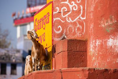 Varanasi 093