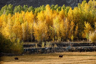 Xinjiang Places 094