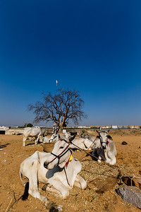 Pushkar 18
