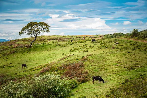 Horton Plains 04