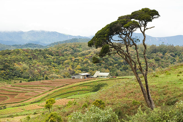 Horton Plains 07