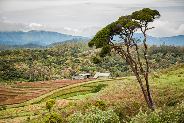 Horton Plains 02