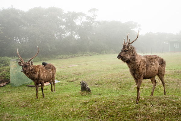 Horton Plains 16