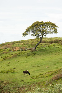 Horton Plains 06