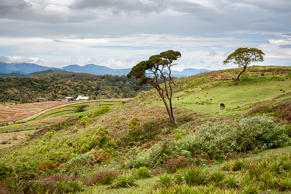 Horton Plains 01