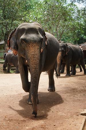 Sri Lanka 07