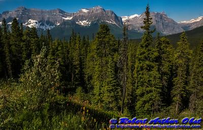 DWS-NPAM_8355_ATO.WestUSACanada2014-CAN.AB.LakeLouise.BanffNationalPark.CanadianRockies.FlowersMountains-B (DSC_8355.NEF)