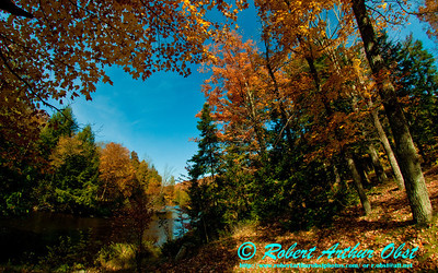 Blazing autumn hardwoods umbrella the wild Wolf River at Military Park (USA WI Lily)