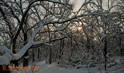 Cross Country skiers view of a snowy oak woods within Governor Nelson State Park (USA WI Waunakee; Obst FAV Photos 2013 Nikon D300s Destinations Wild Scenic Image 4513)