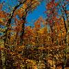 Blazing autumn foliage and blue skies umbrella hikers near the Summit Peak Observation Tower wihtin Summit Creek Scenic Area and Porcupine Mountains Wilderness State Park (USA MI Ontonagon)