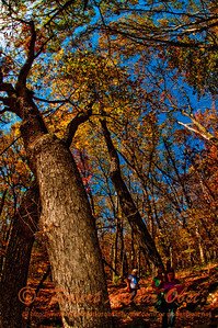 Hiker's enjoy brilliant autumn colors under Cobalt Skies along West Bluff Trail within Devils Lake State Park (USA WI Baraboo)