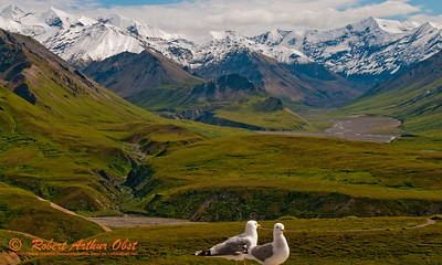 Hikers and birds eye view of Mount McKinley from Eielson Visitor Center near Denali Park Road within Denali National Park (USA Alaska Denali Park)