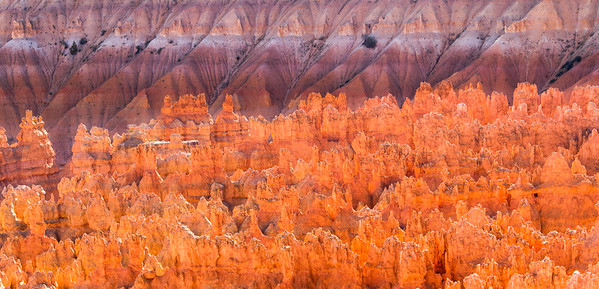 Late afternoon sunlight creating a beautiful glow on the hoodoos of Bryce Canyon National Park.