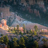 Bryce Canyon hoodoos glowing at sunrise.