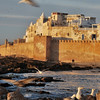 "Essaouira, Morocco, is a glistening white harbor town where there is no escaping the gulls. Rumor has it that the inspiration for ""The Birds"" came during a visit here. I have no doubt that is true, since they are truly fearless, flying straight at anyone who disturbs the peace by, say, waiting for the sun to set."