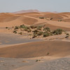 Plants grow in sheltered spots between the sand dunes forming at the edge of the Sahara Desert in Morocco