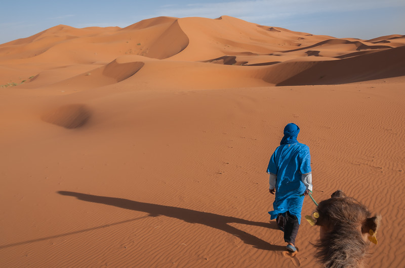 A man dressed in the blue of the Saharan Tuareg leads a camel into a landscape of windswept orange dunes in Morocco.