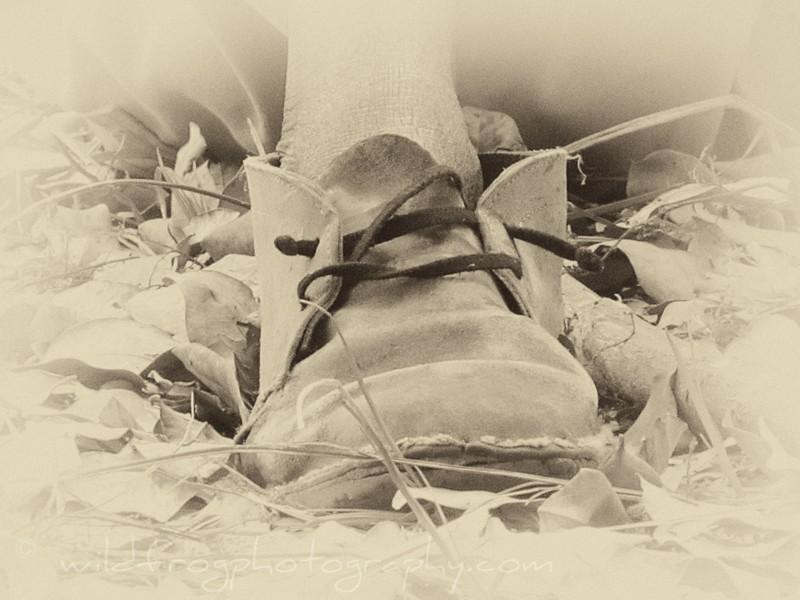 Old mans Shoe, Okavango Delta,Botswana