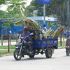 Transporting suger cane Zanzibar