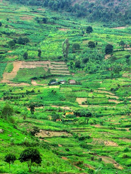 Rwanda farm land