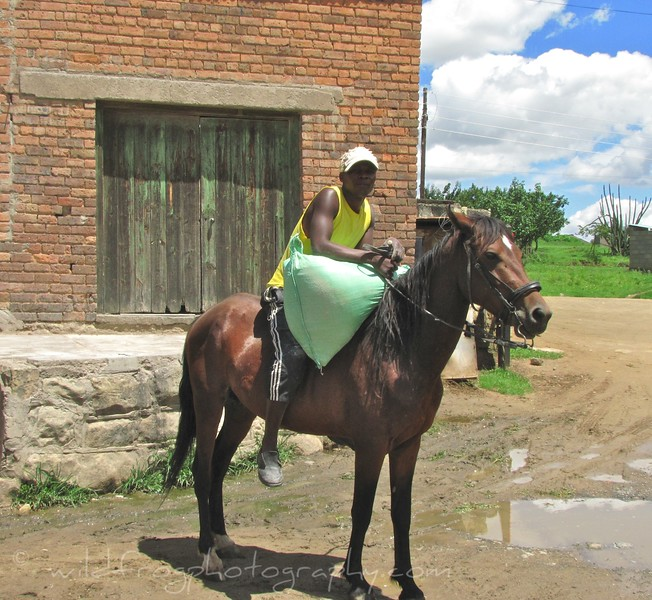 loading up the horse - Lesotho
