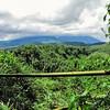 Looking across Bamboo forest- Rwanda
