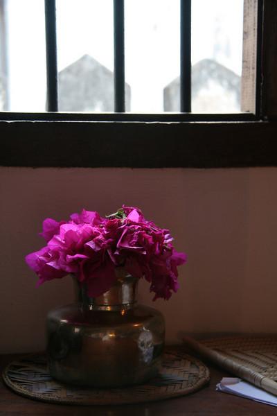 Pink in Bloom