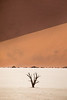 Scenes from Deadvlei, Namibia
