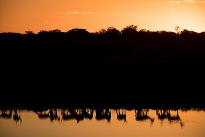 Scenes from Etosha, Namibia