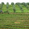 John Deere Wine