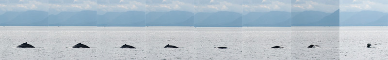 whale_sequence1