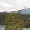 medow_Panorama1