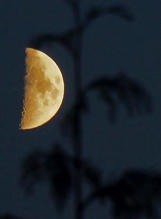 Half moon at Wrangell, Alaska, #0411