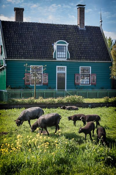 Village of Zaanse Schans