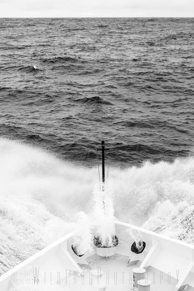 Crossing the Drake Passage