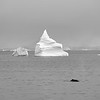 Icebergs and a Whale