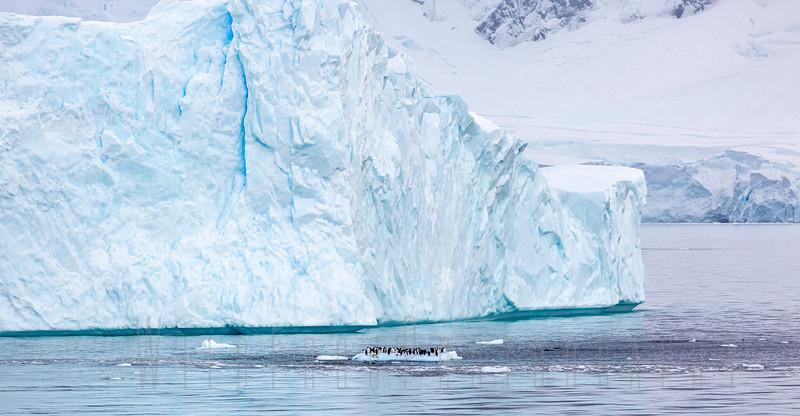 Raft of penguins