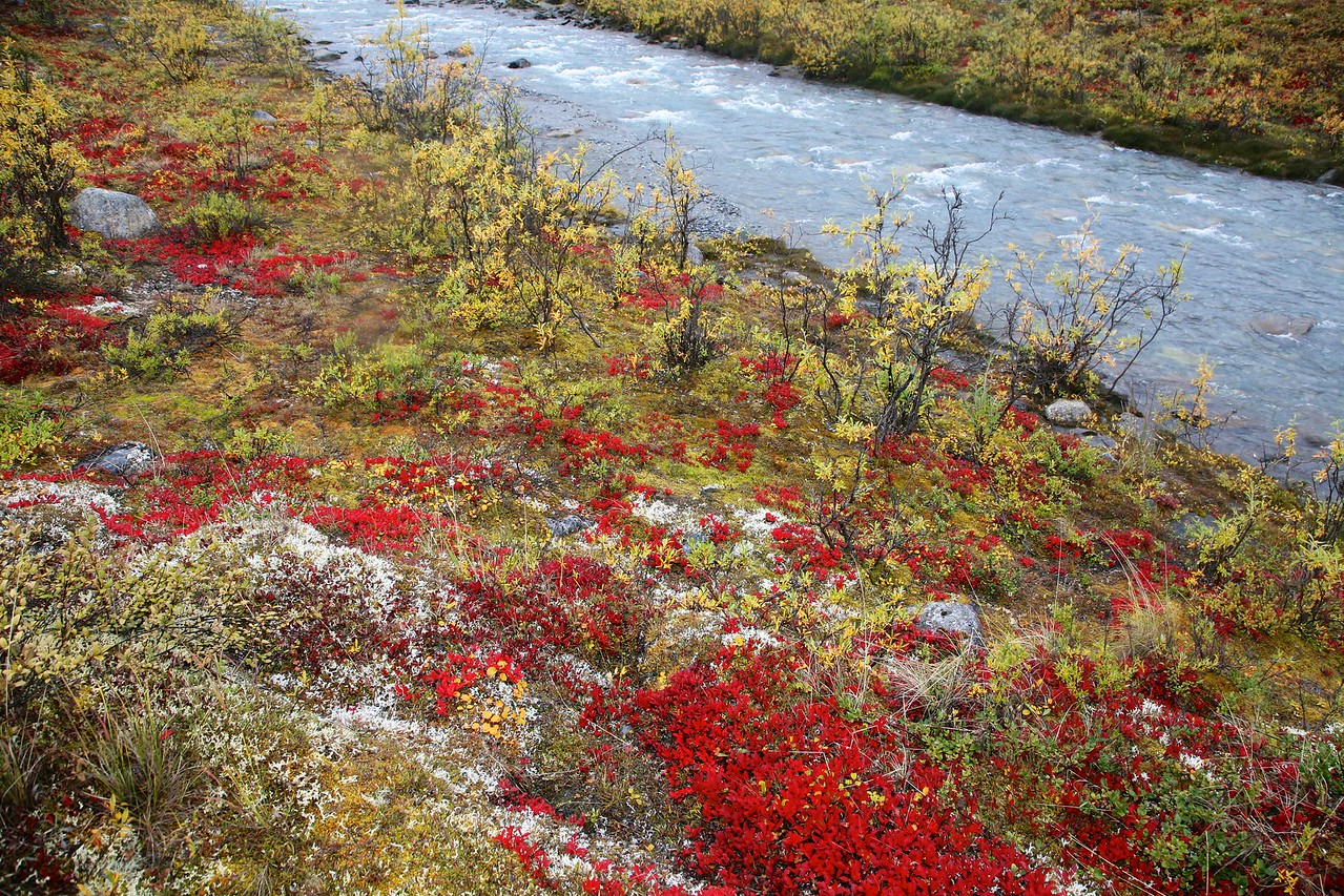 The vibrant colors of fall - Arctic National Wildlife Refuge