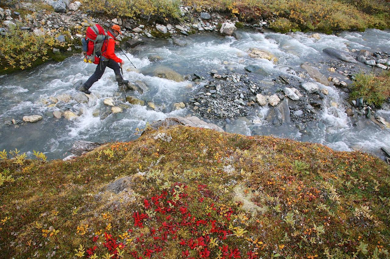 A hint of autumn - Arctic National Wildlife Refuge