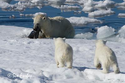 Seal Hunt, Spitsbergen, Norway