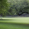 Lodi Park