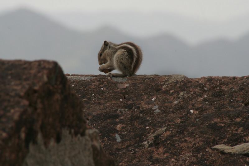 Squirrely Behavior