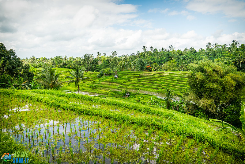 Emerald green, rice paddies of Jatiluwih rice terrices in Bali, Indonesia.