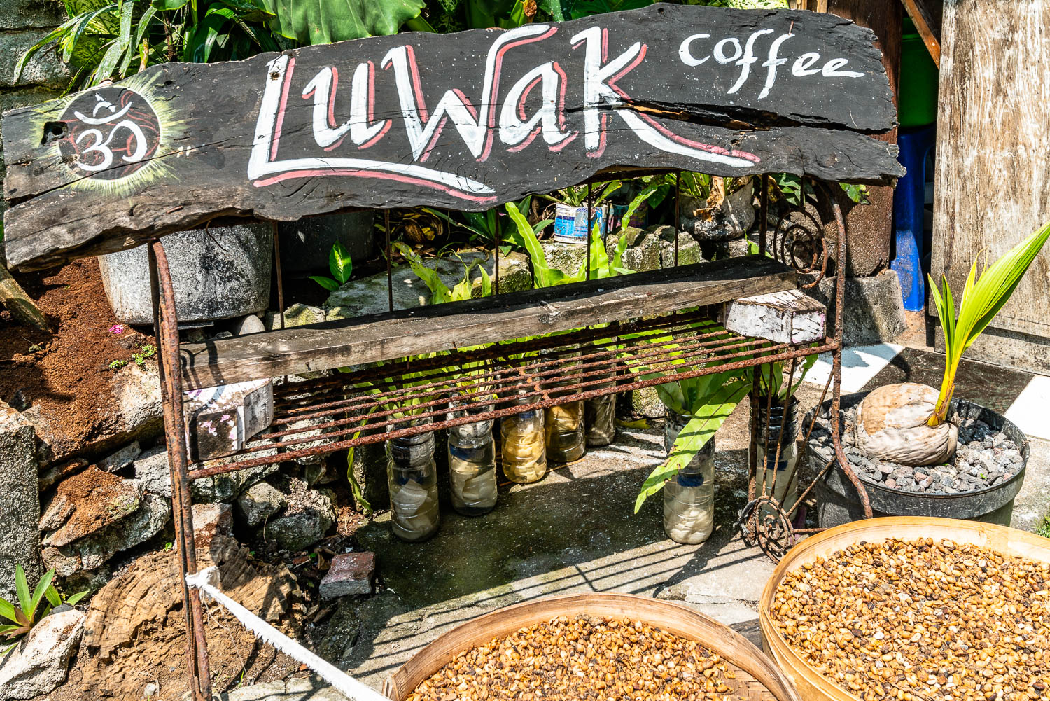 Kopi Luwak (coffee Luwak), also known as Civet coffee, is tasty and expensive.