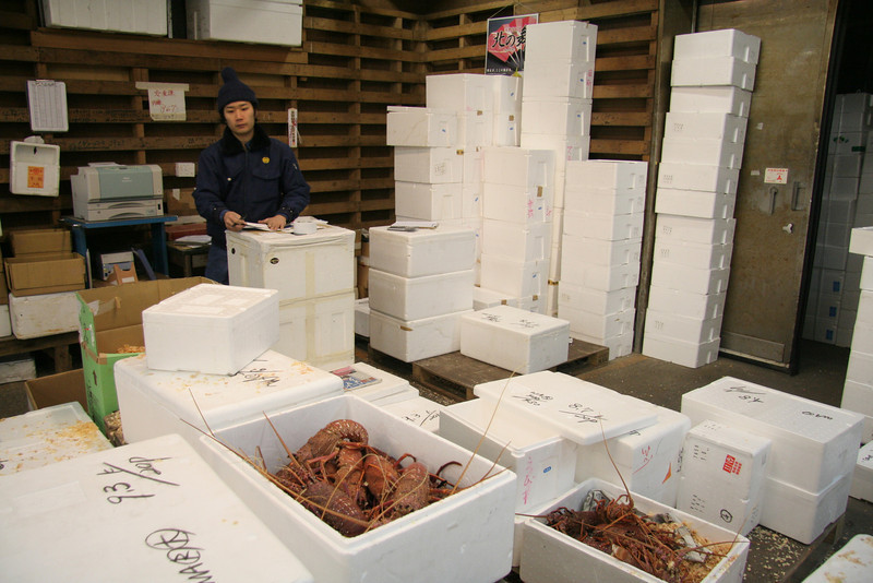 Prepping the lobster for sale