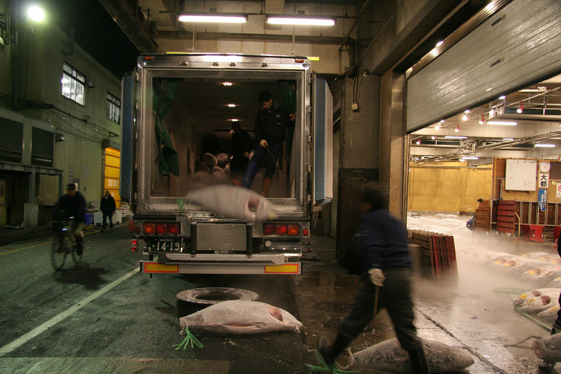 The tuna has arrived, unloading the truck