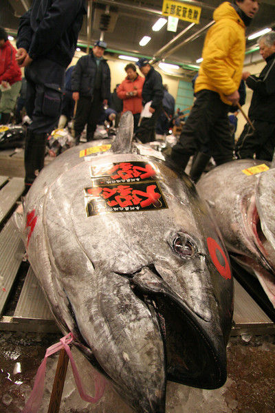 The $14,000 tuna, the cost of a small car