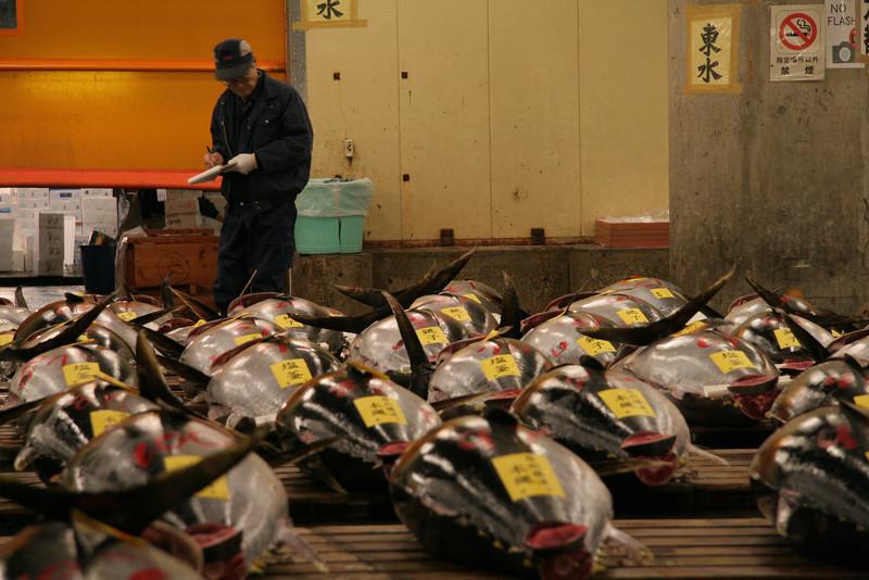 Inspecting the fresh tuna