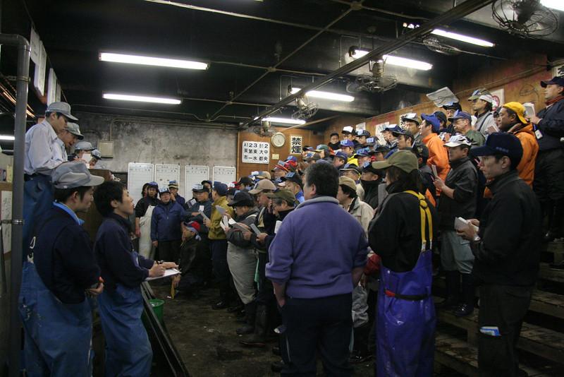 LIve Fish Auction