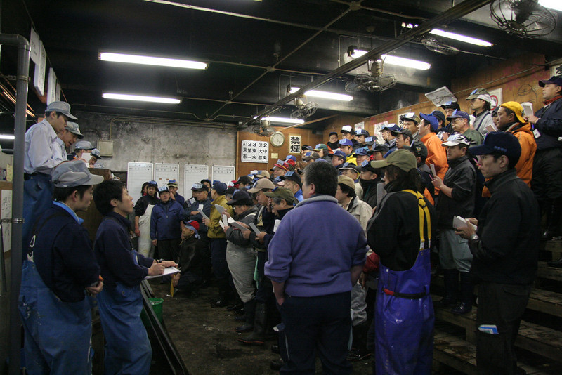 LIve Fish Auction